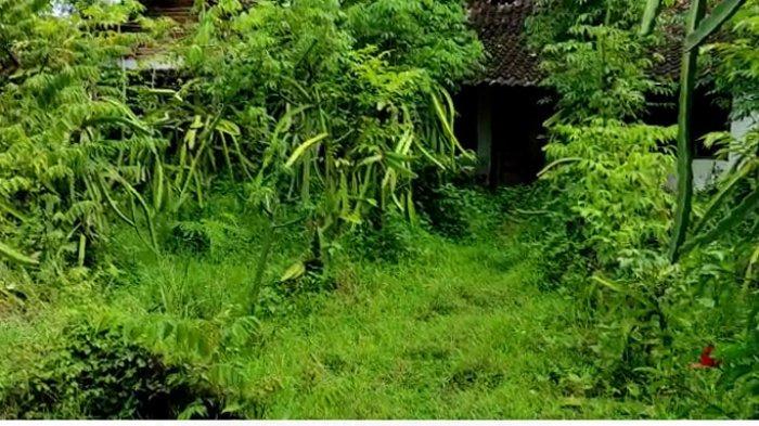 Sumbulan, satu Kampung di Desa Plalangan, Kecamatan Jenangan, Kabupaten Ponorogo yang sepi tak berpenghuni.