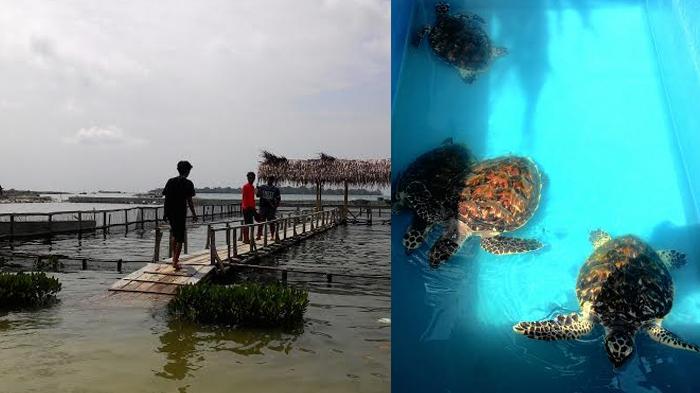 Taman Biota Laut di Pulau Harapan, Lokasi Tepat Memahami Ekosistem Kepulauan Seribu