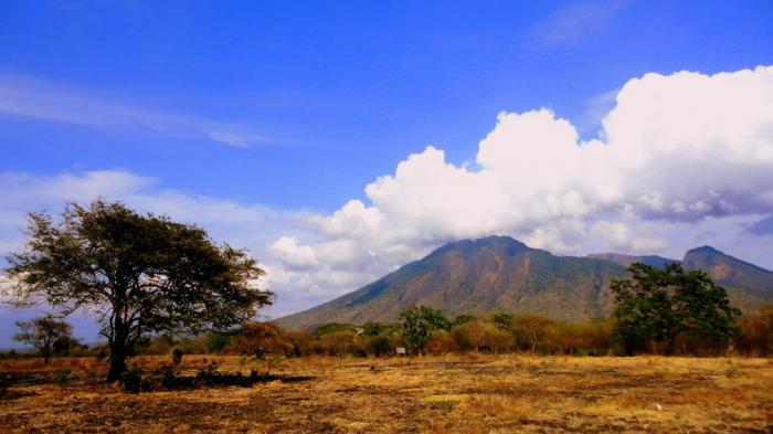 Taman Nasional Baluran Bernuansa Savana Afrika