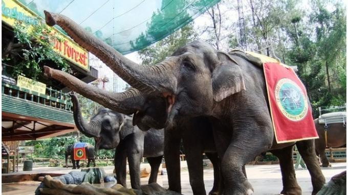 Animal Show dan Tarian Api Hiburan Andalan Taman Safari Bogor di Liburan Panjang