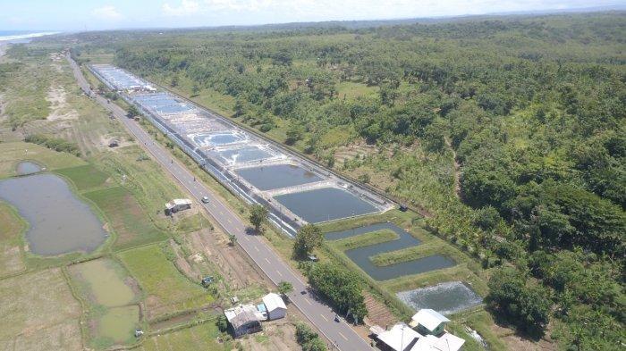 Tambak Udang Berkelanjutan KKP Jadi Penggerak Ekonomi Pesisir Cianjur