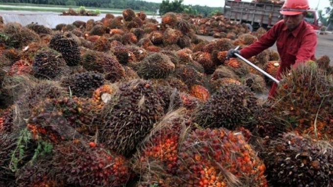 Kinerja Minamas Plantation Masih Terpengaruh El Nino