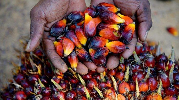 Industri Sawit Berkontribusi Kurangi Angka Kemiskinan Masyarakat di Sabang Sampai Merauke
