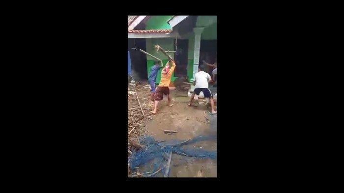 Viral Seekor Babi Dipukuli Warga hingga Mati Gara-gara Buat Resah Masyarakat, Sempat Ganggu di Kebun