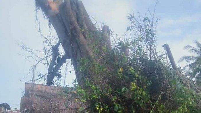 Tebang Pohon Ratusan Tahun yang Tumbang, Seorang Pria Tewas, Sempat Terpental dan Muntah-muntah