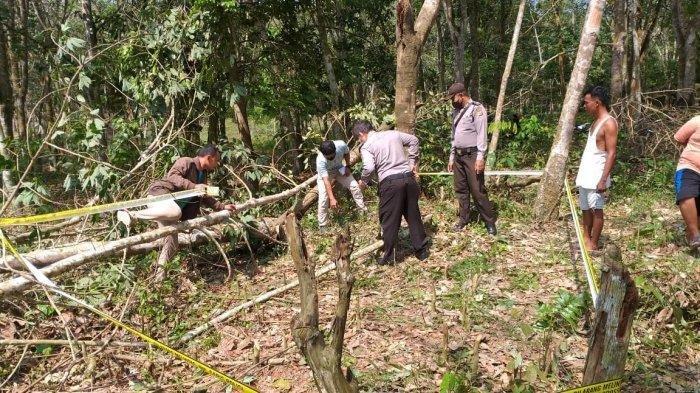 Warga Pelalawan Ditemukan Tewas Mengenaskan, Diduga Tertimpa Pohon Karet