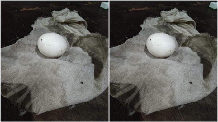 Geger Telur Ayam Dibungkus Kain Kafan Jelang Pemungutan Suara Pilkada Muratara, Dikirim Tengah Malam