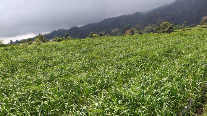 Terkait Impor Hortikultura, Kementan Tegaskan Hanya Beri Rekomendasi Teknis
