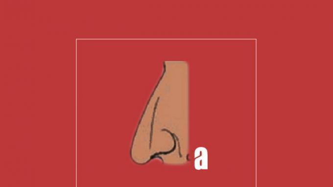 Bentuk hidung menyerupai huruf