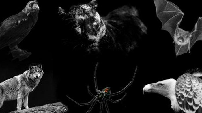 Tes kepribadian - Hewan yang kamu pilih dapat mengungkap sisi gelap dalam dirimu.