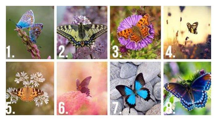 Tes Kepribadian - Manakah Kupu-kupu yang Paling Cantik? Ungkap Rahasia Terdalam dari Sifat Aslimu!