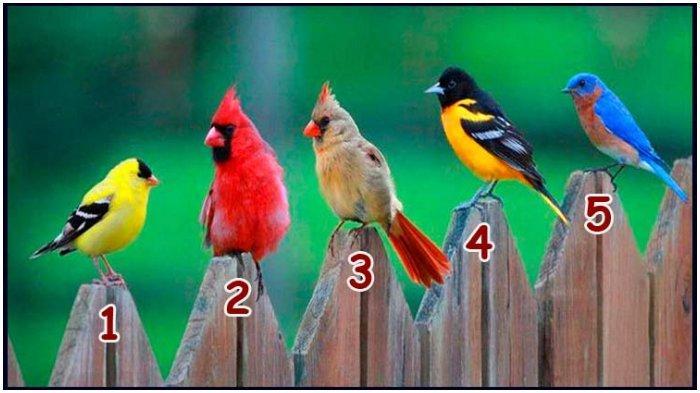 Tes kepribadian mengungkap sifat dominan karakter dengan cara memilih satu gambar burung.