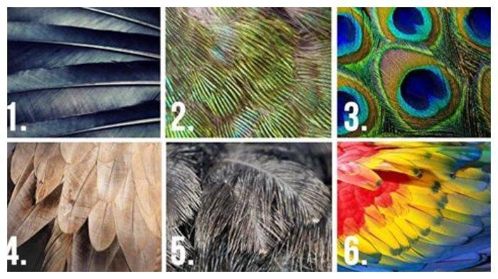 Tes kepribadian - Warna bulu yang kamu pilih dapat ungkap sifat aslimu yang tersembunyi.