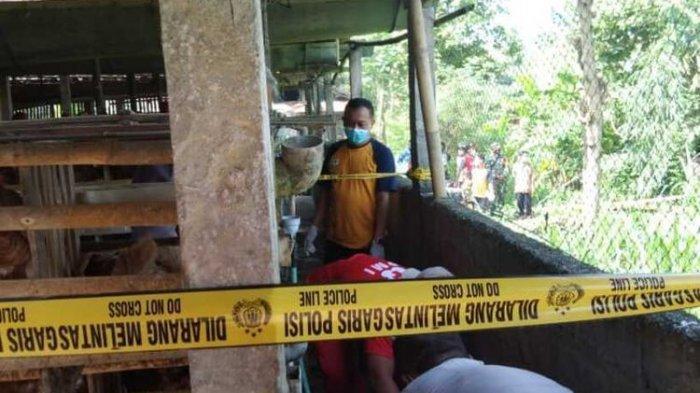 Pria 50 Tahun Ditemukan Tewas di Kandang Ayam, Telapak Tangan Gosong, Diduga Tersengat Listrik