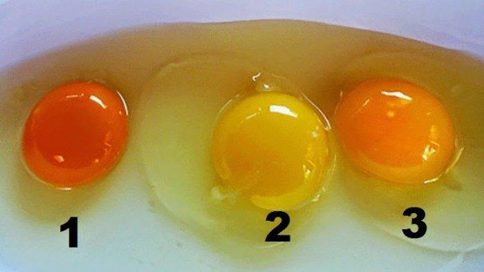 Manfaat Kuning Telur untuk Anak, Dewasa, dan Lansia