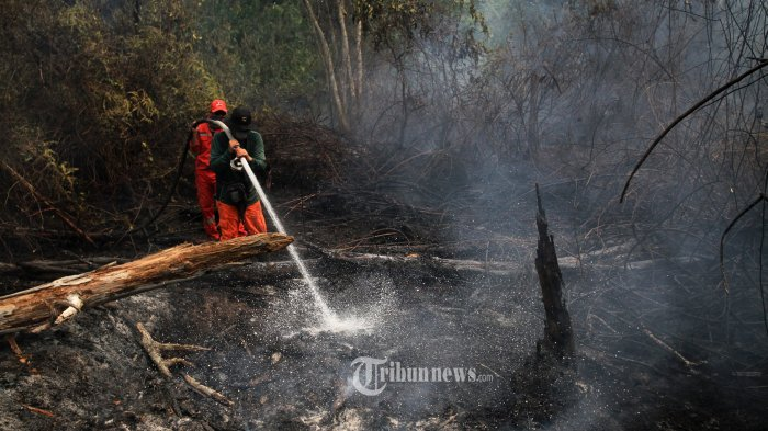 Respons KLHK Sikapi Postingan Luna Maya Soal Karhutla di Jambi: Emang Dia Pernah Padamkan Api