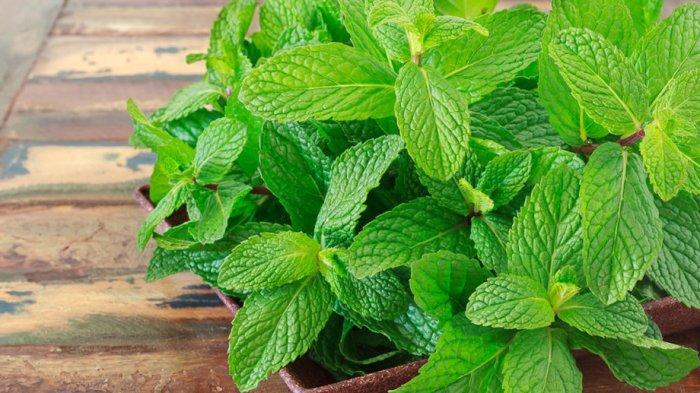Daunt mint merupakan salah satu makanan yang dapat menyebabkan heartburn