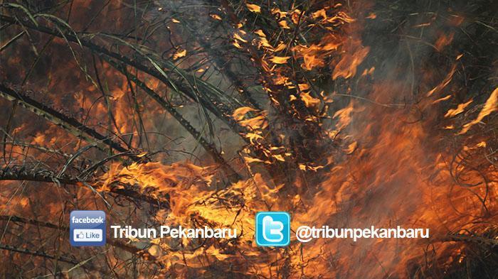 13 Titik Panas Terpantau di Sumut, Mayoritas di Tapanuli Utara