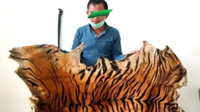 KLHK: Berkas Penyidikan Kasus Penjualan Kulit Harimau di Aceh Lengkap, Siap Disidangkan
