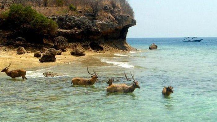 Taman Nasional Bali Barat Masuk 100 Destinasi Wisata Terbaik di Asia-Pasific