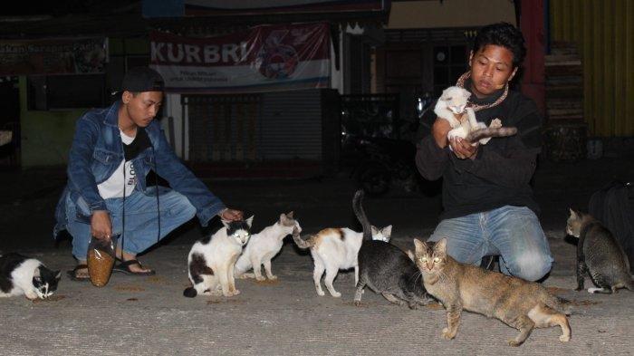 Kisah Tono 'Bapaknya' Kucing Liar di Pasar Damar Banyumanik, Sekali Siul Puluhan Kucing Berdatangan