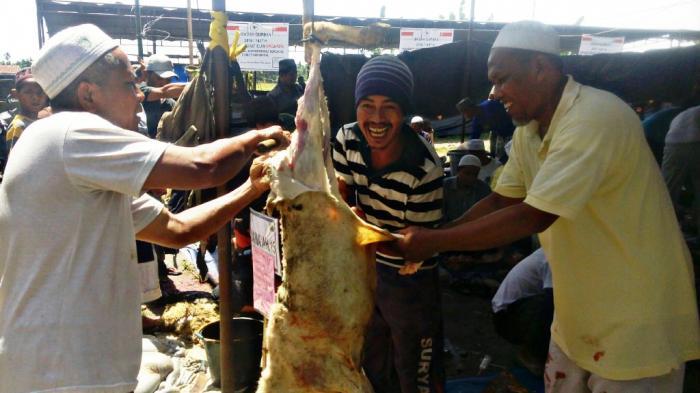Hewan Kurban di Pesantren Al Mundziri Ada 760 Ekor, 120 Tukang Potong Didatangkan