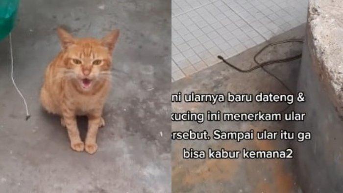 VIRAL Wanita Terselamatkan dari Gigitan Ular Karena Ditolong Kucing Liar, Ini Kronologi Lengkapnya