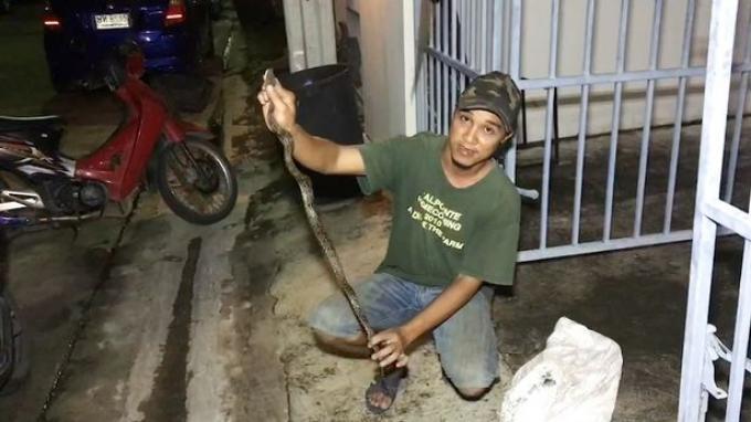 ular dievakuasi petugas penanganan hewan