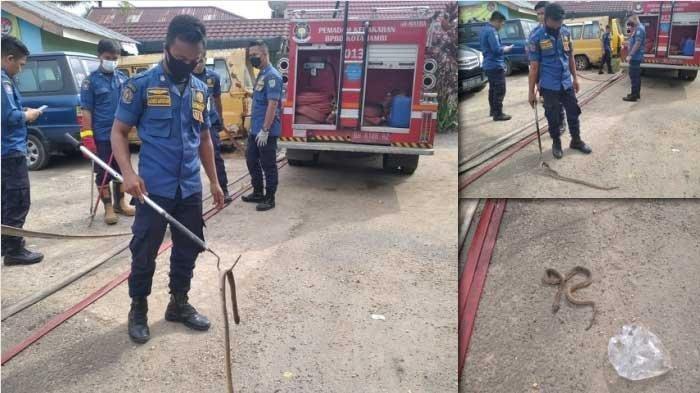 17 Jam Damkar Kota Jambi Evakuasi Ular Kobra di Pipa Pembuangan Air