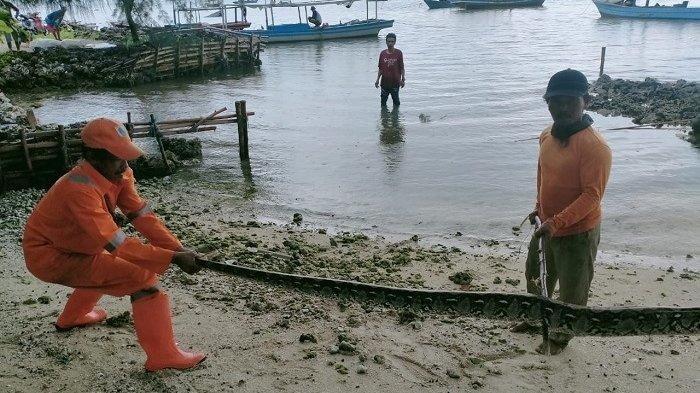 Ular Sanca 4 Meter Hebohkan Warga di Pulau Pari Kepulauan Seribu