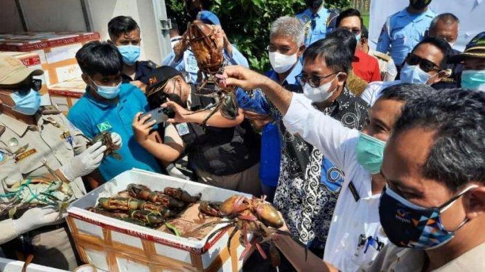 Tujuh Ton Kepiting Bakau Indonesia Tembus Pasar Tiongkok, Nilainya Capai Rp 1,2 miliar