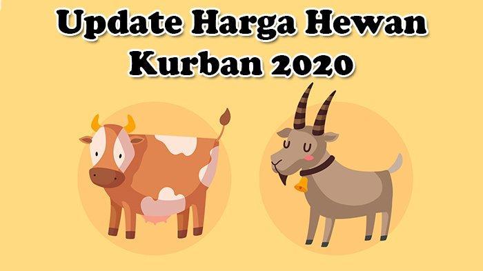 Update Daftar Harga Hewan Kurban Idul Adha 2020: Kambing Mulai Rp 1,5 Jutaan, Sapi Rp 14 Jutaan