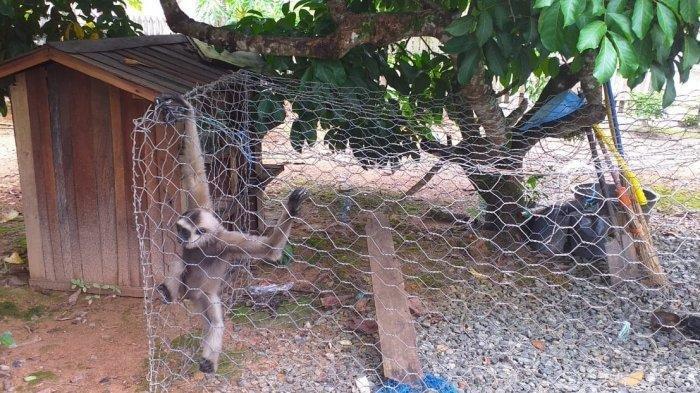Hewan Langka yang Ditemukan Saat Gerebek Pengedar Sabu Diserahkan ke BKSDA