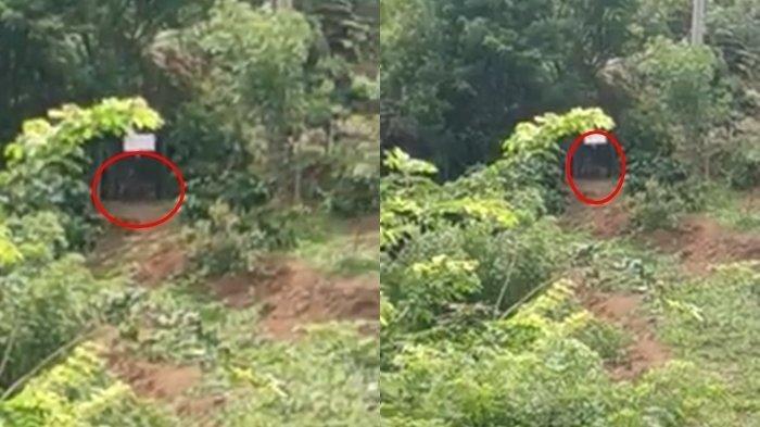 Beredar Video BKSDA dan Warga Berhasil Tangkap Harimau di Muaraenim