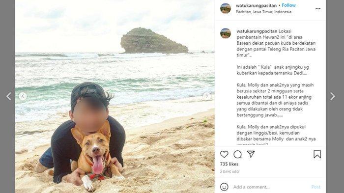Viral 11 Anjing Dibantai dan Dibakar di Pacitan, Polisi Turun Tangan, Ini Dugaan Motifnya