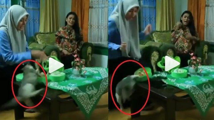 Viral Adegan Kucing di Sineron Azab, Pecinta Hewan Layangkan Protes, Ini Alasannya