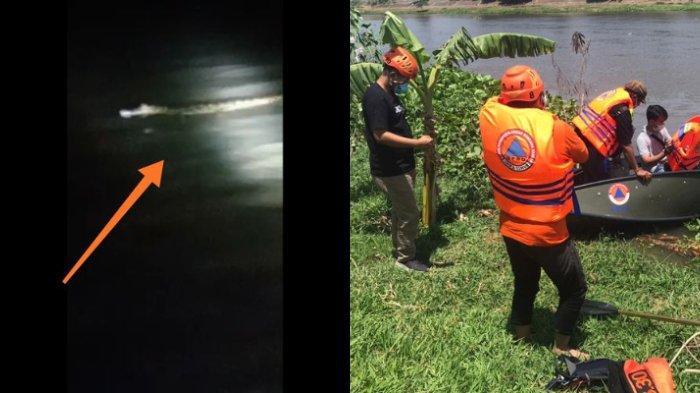 VIRAL Video Buaya Putih Muncul di Sungai Brantas, BPBD Imbau Warga untuk Berhati-hati