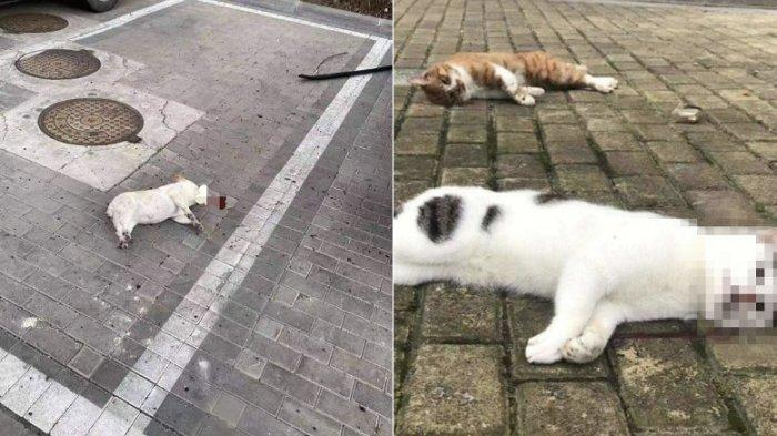 Viral Kucing Dan Anjing Di China Dilempar Dari Jendela Pemiliknya Takut Tertular Virus Corona Tribunnews Com Mobile