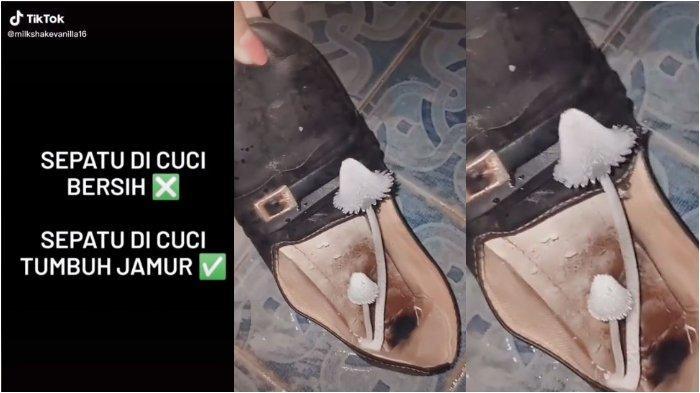 Lupa Dijemur, Sepatu Milik Wanita Ini Tumbuh Jamur Setinggi Ini, Videonya Viral