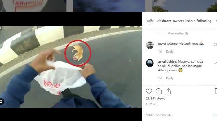 Viral Pengendara Ambil Bangkai Kucing Oren di Tengah Jalan, Ini Cerita Sebenarnya