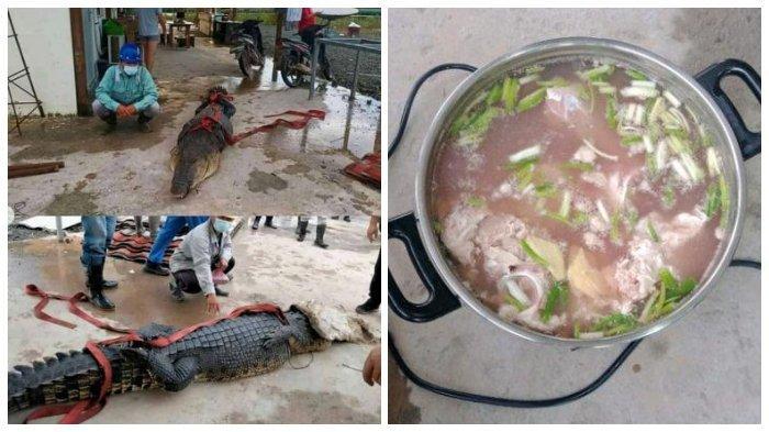 Viral TKA China di Konawe Kuliti Buaya yang Dilindungi dan Dijadikan Sup, Ini Kata BKSDA Sultra