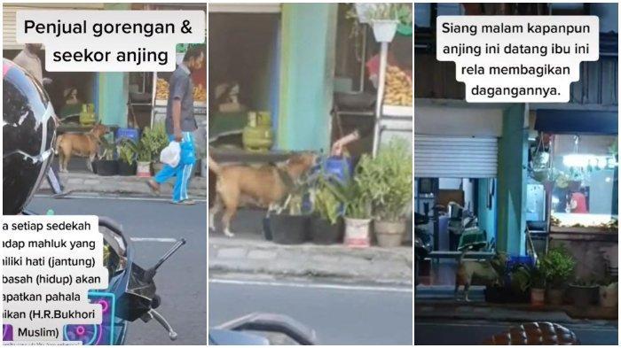Kisah Video Viral Anjing di Bali Rajin Minta Makanan ke Wanita Pedagang Gorengan
