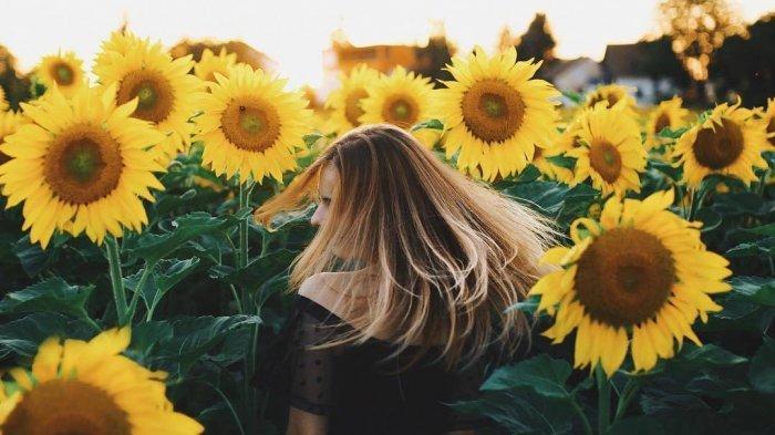 Viral Bunga Matahari Keluarkan Suara Musik Yang Merdu Ternyata Ini Asal Suaranya Tribunnews Com Mobile