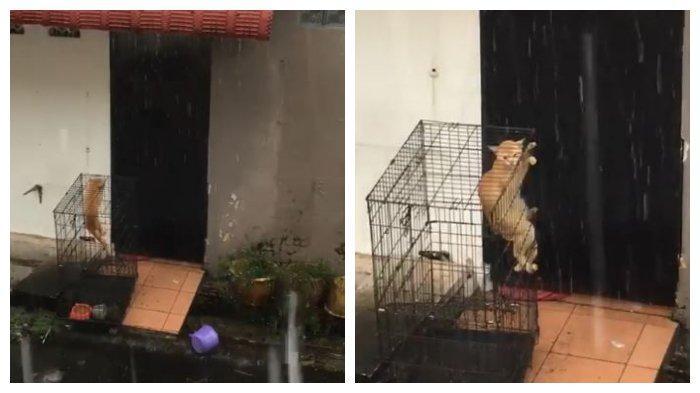 VIRAL Video Kucing Dikandang dan Diletakkan di Luar Rumah saat Hujan, Dibiarkan Basah dan Kedinginan