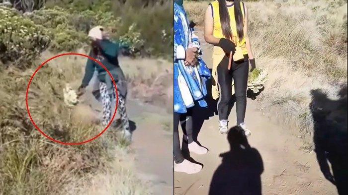 Viral Video Pendaki Tertangkap Basah Petik Bunga Edelweis, Dapat Peringatan dari Pendaki Lain