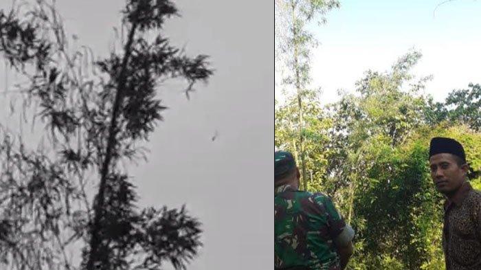 VIRAL Video Pohon Bambu di Madura 'Berbuah', Tokoh Desa Ungkap Fakta di Baliknya: Bambu Ini Berbeda