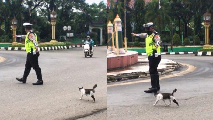 VIRAL Aksi Polisi Bantu Kucing Menyeberang Jalan, Senang Dapat Banyak Pujian dari Warganet