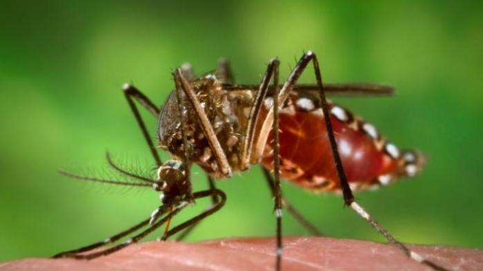 India Keluarkan Peringatan soal Munculnya Virus Zika, Belum Ada Obat dan Vaksin