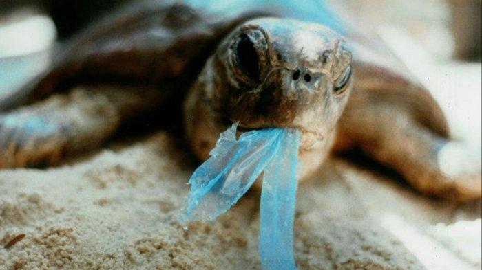 Dipenjara Hingga Denda Puluhan Juta, Ini Kebijakan Gunakan Kantong Plastik di Berbagai Negara!
