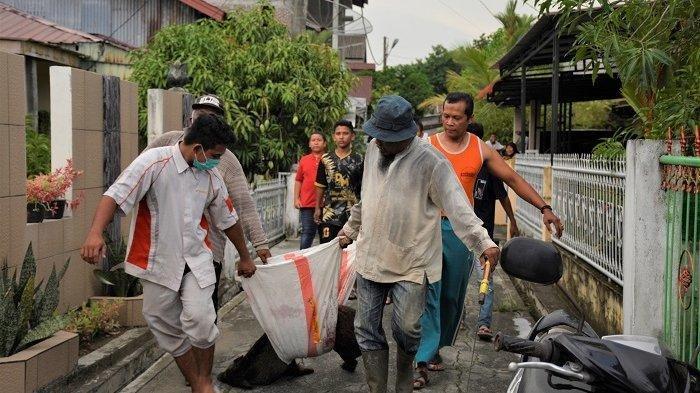 Warga di Aceh Barat Buru Seekor Babi Hutan Bersama 5 Anaknya yang Berkeliaran di Permukiman